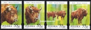 zubr-bison